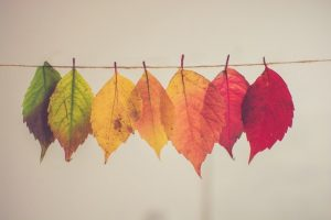leaves changing color on clothes line